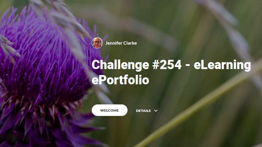 254 rise portfolio thumb